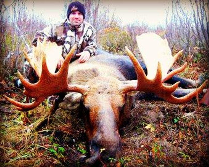 Wtp moose (pano)