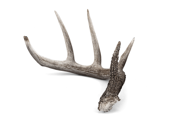 WP-Sitewide-Antler-Footer