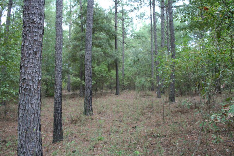 25- pines