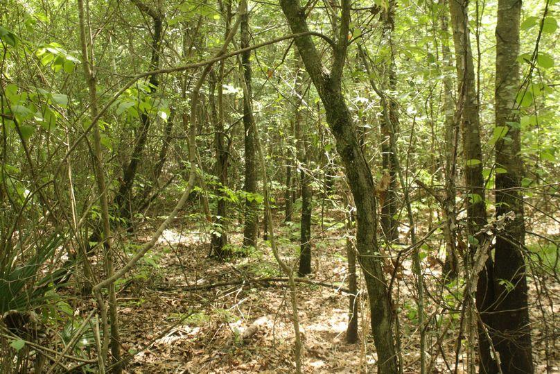 05-hardwood timber