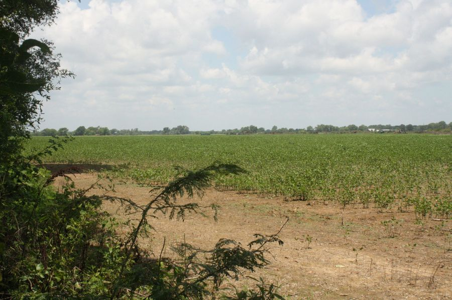 09-crop field on north side