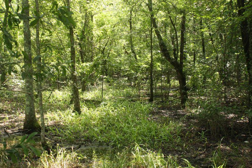 03-hardwood timber