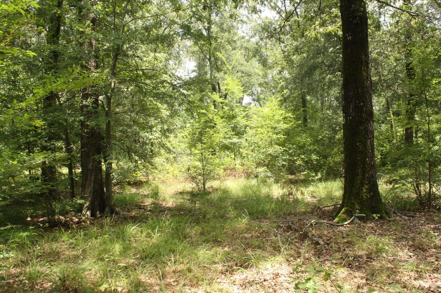 14-mature hardwoods