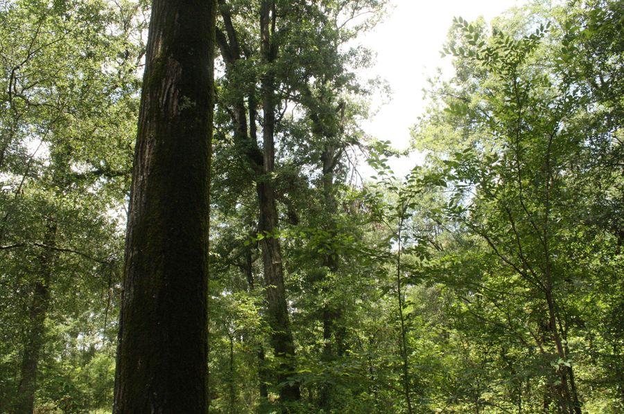 19-hardwood timber