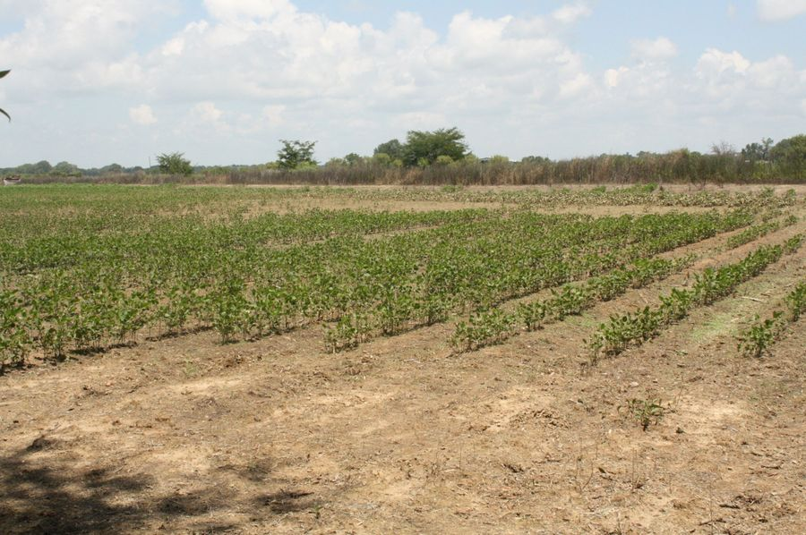 11-bordering soy bean field