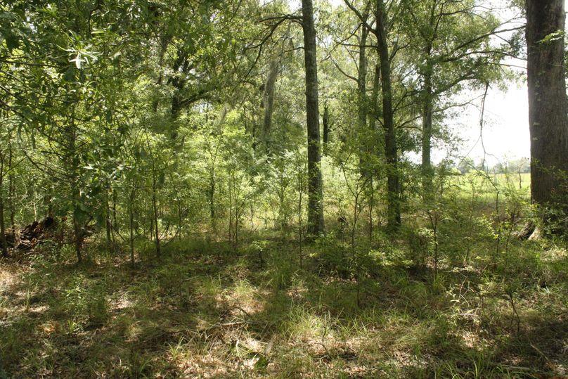 22-timber along pastureland