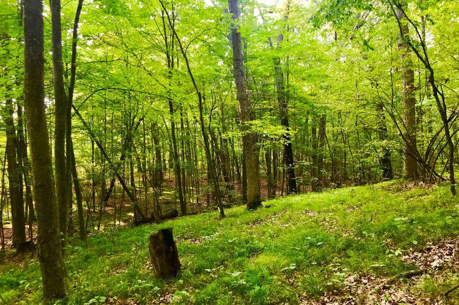 64 timber northeast