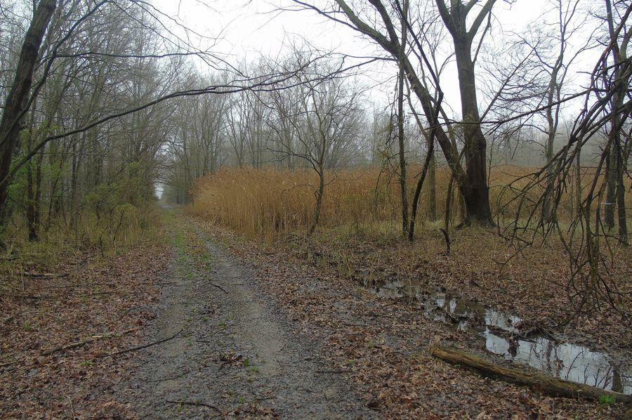 Cattail thicket