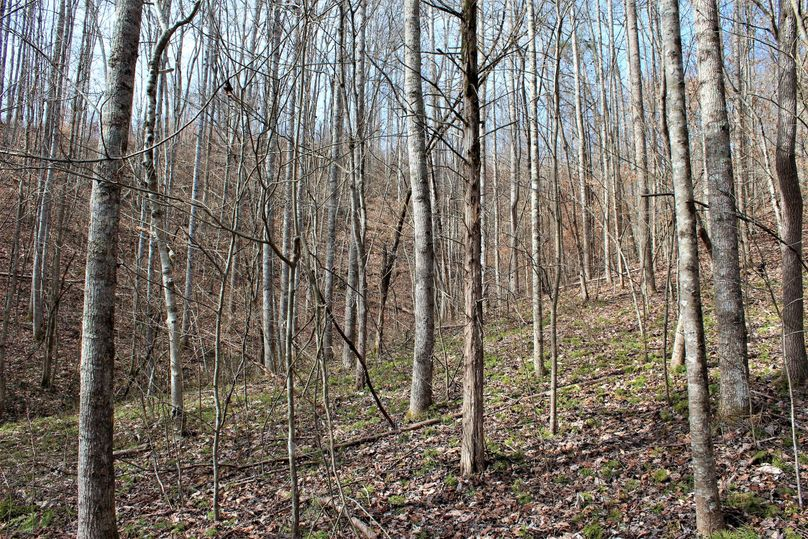 014 reforested area near the southeast boundary of the property