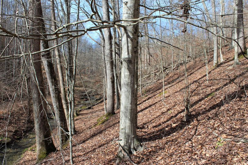 020 mature beech trees sitting behind the old homestead near the southeast portion of the property