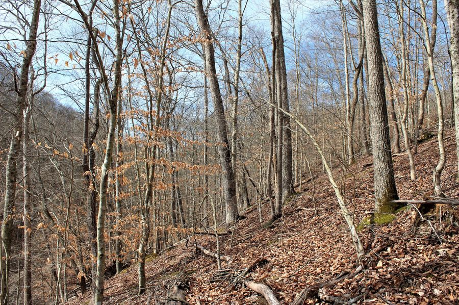 032 forested slope in the south area of the property