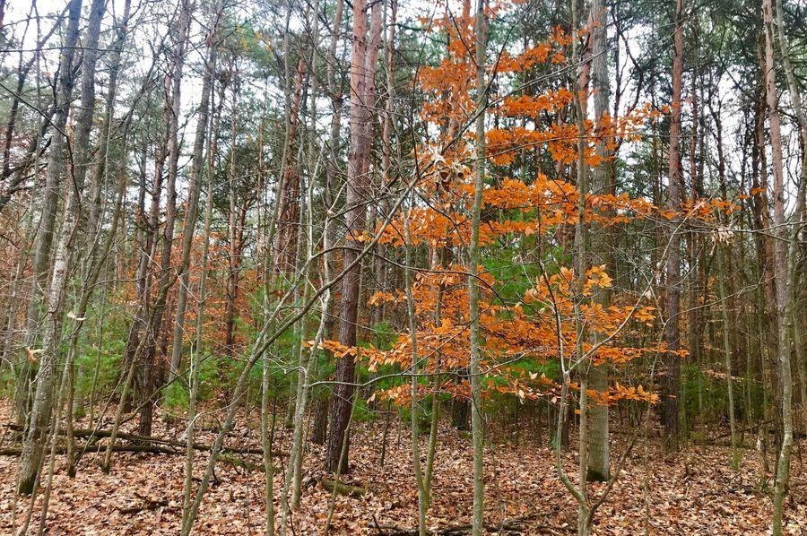 34 mixed timber