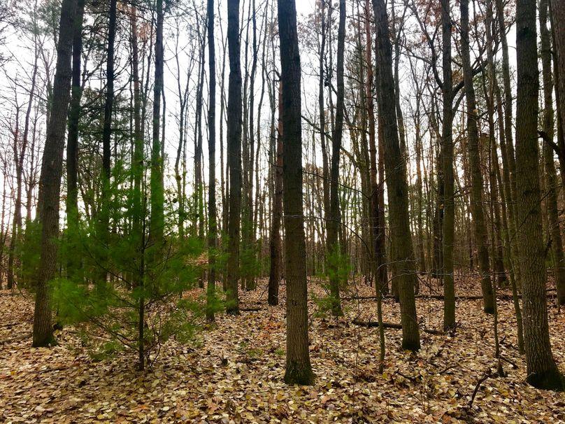 37 hardwood timber