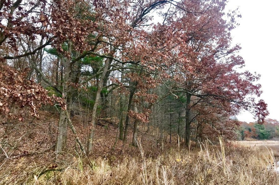 31 oaks on north bank of south lake