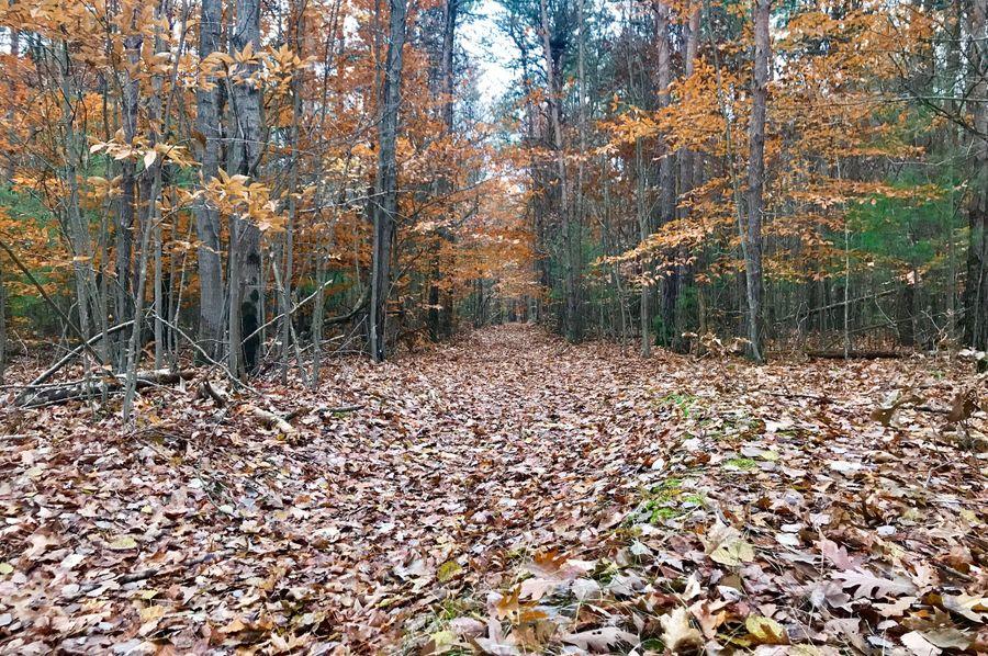 3 trail