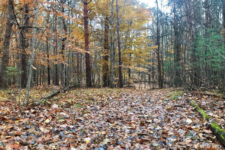 49 west trail