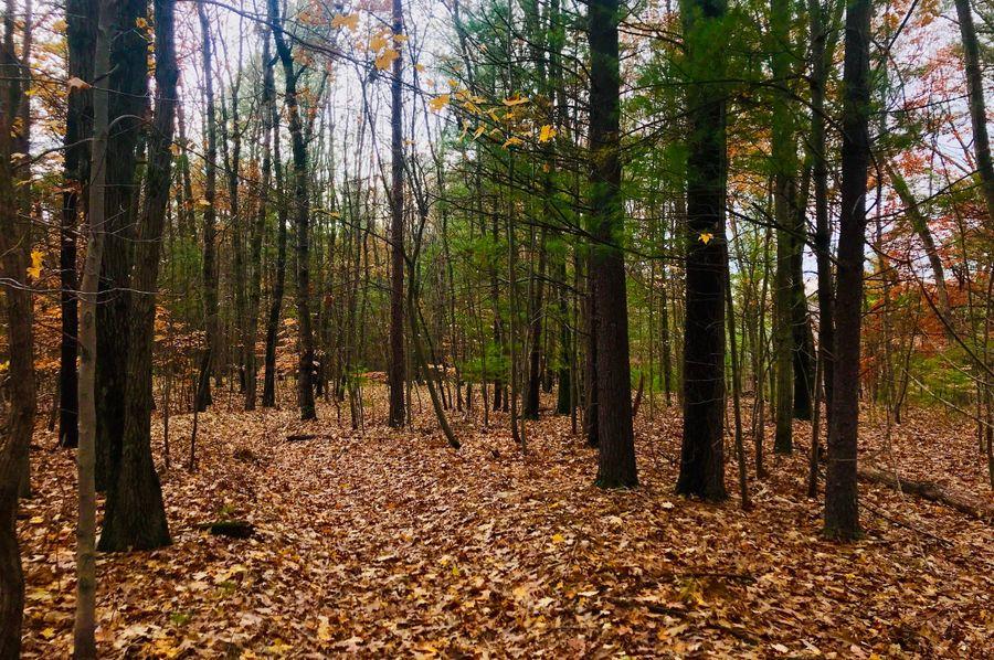 41 trail north