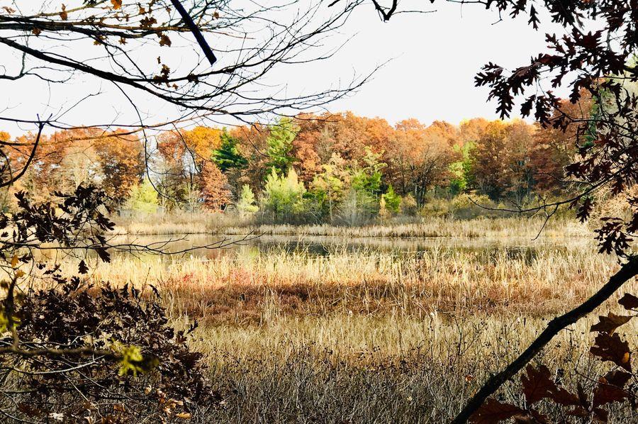 59 south lake