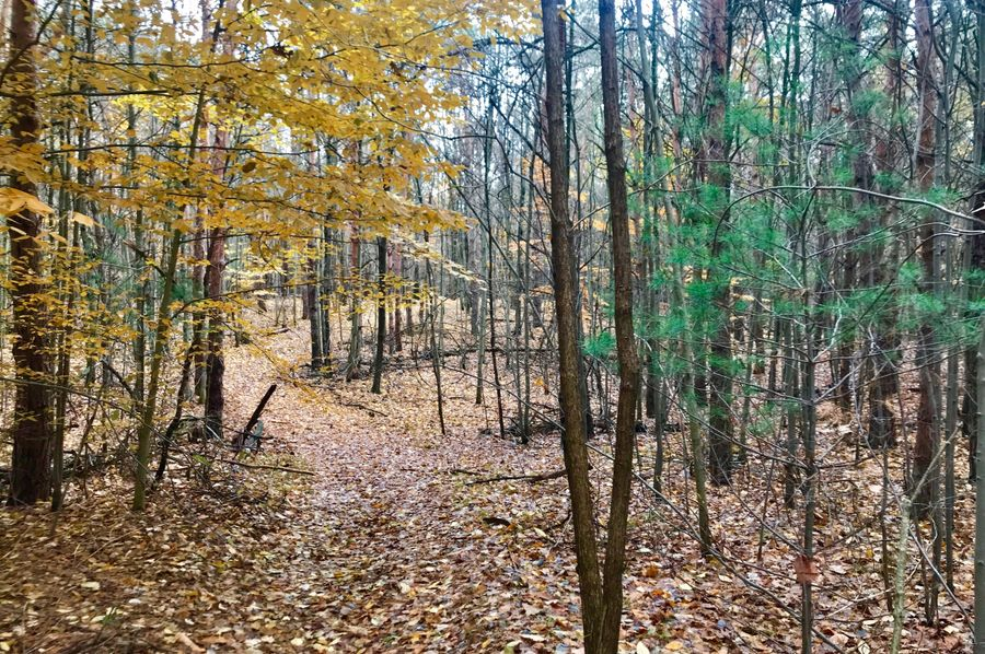 50 west trail