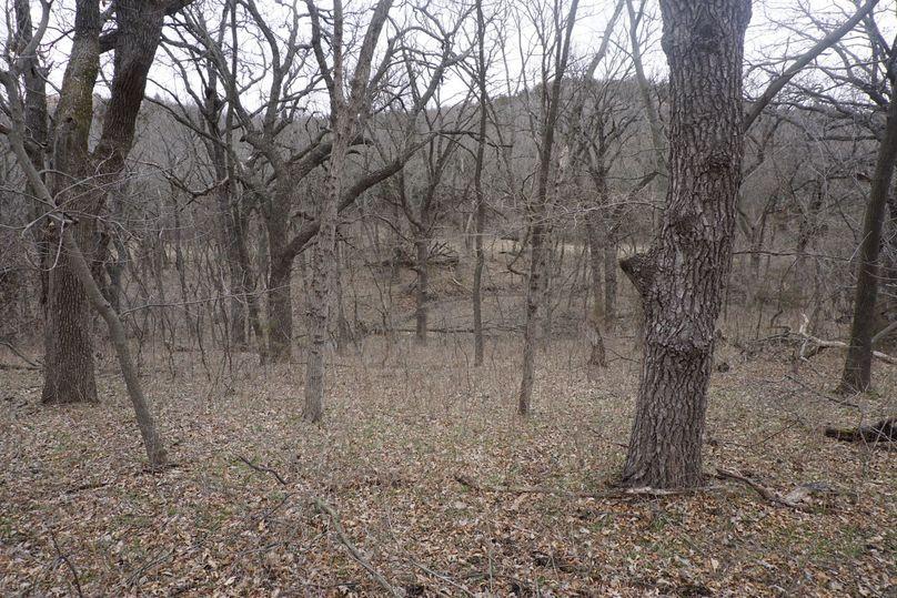 Timber edge along south east corner