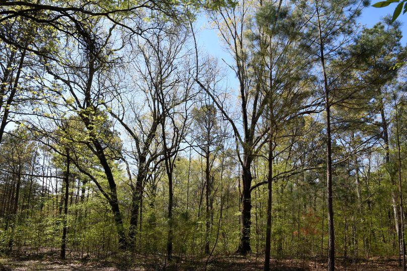 (6)oaks