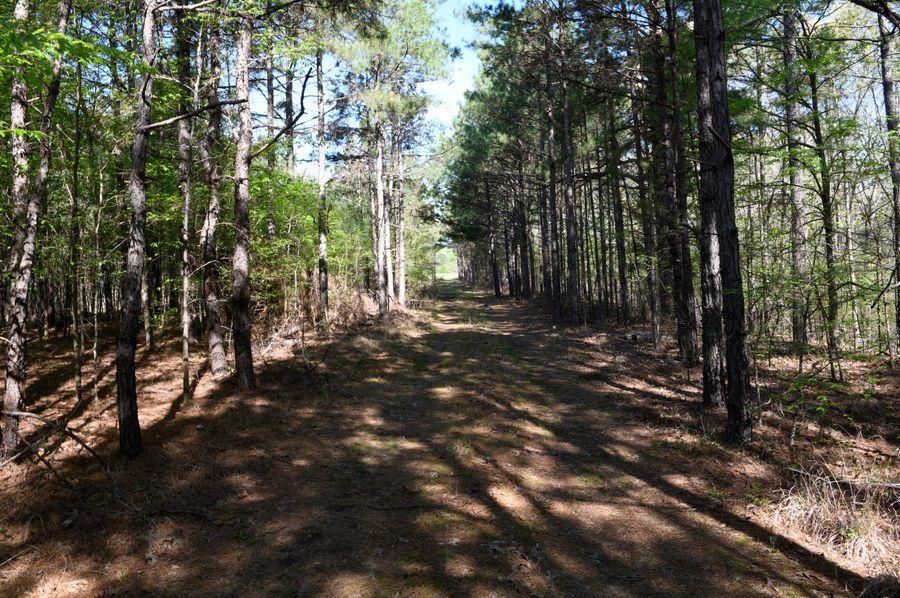 (11)trail 2