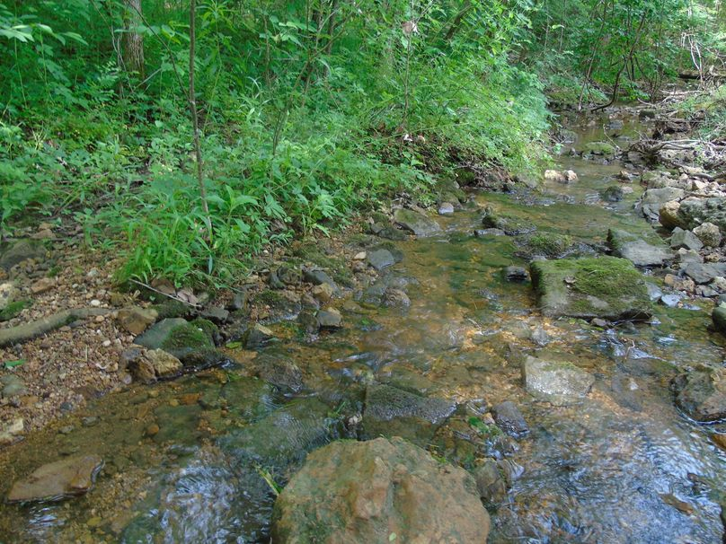 Spring fed creek runs through the resort