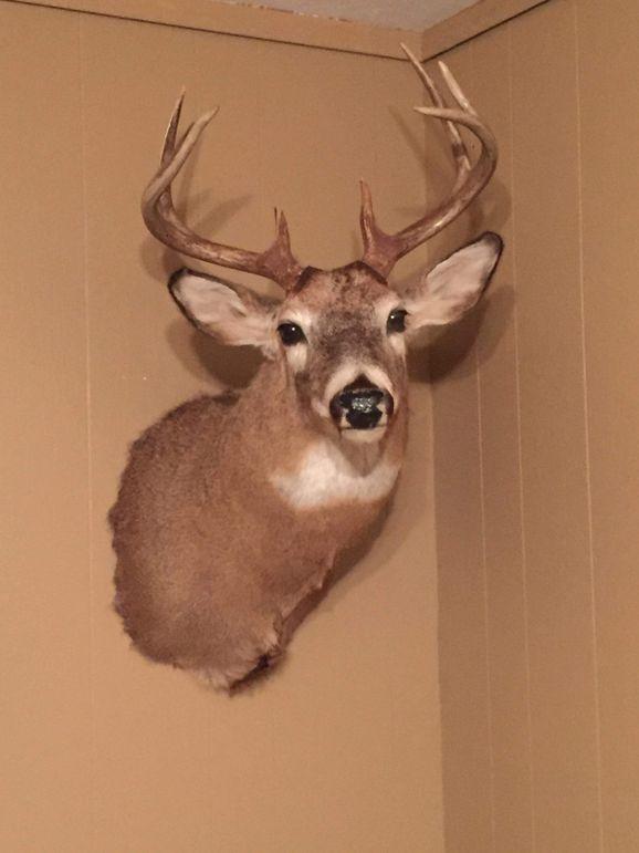 Pic 7 shoulder mount
