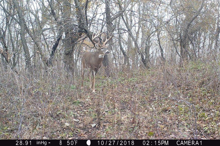Iowa archery buck alive-2