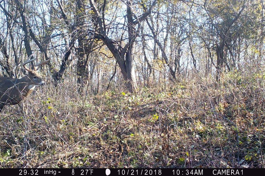 Iowa archery buck alive 2-2
