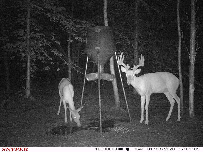 Trail cam41