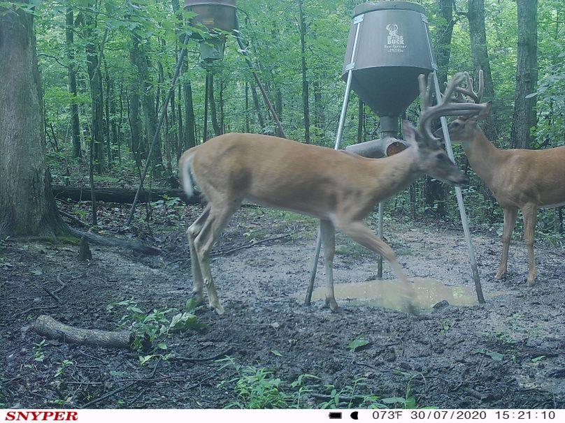 Trail cam45