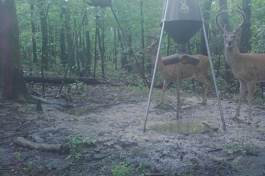 Trail cam48