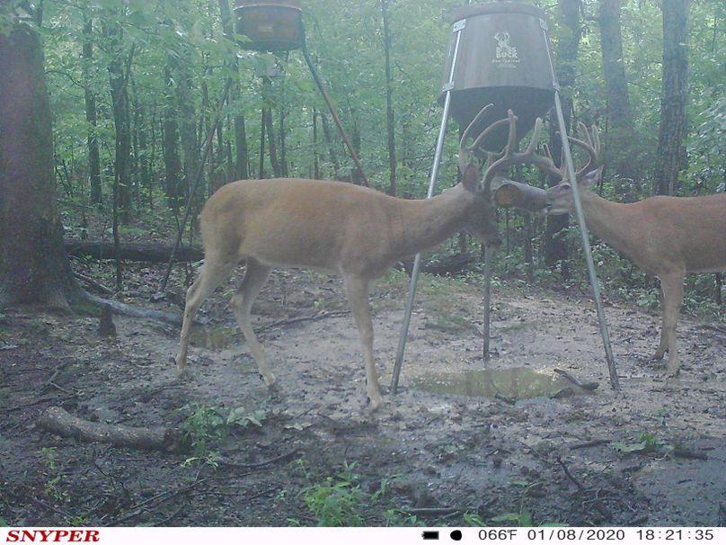 Trail cam50