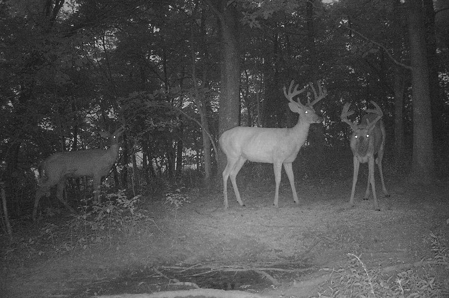 Trail cam51
