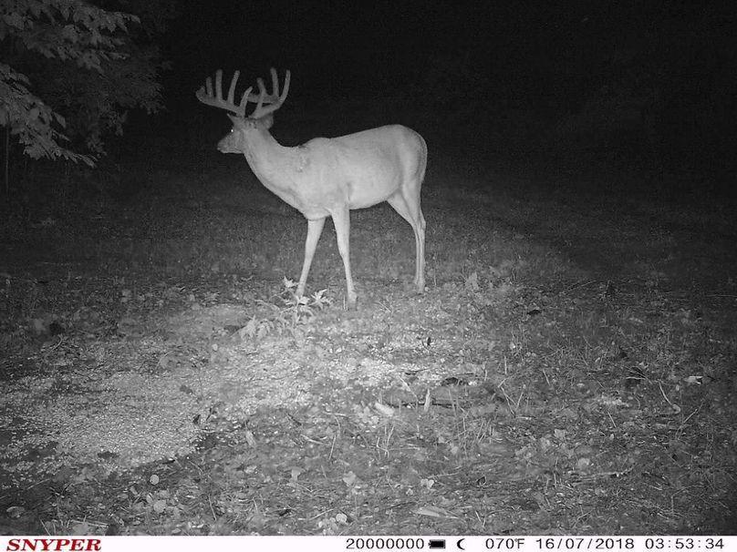Trail cam8