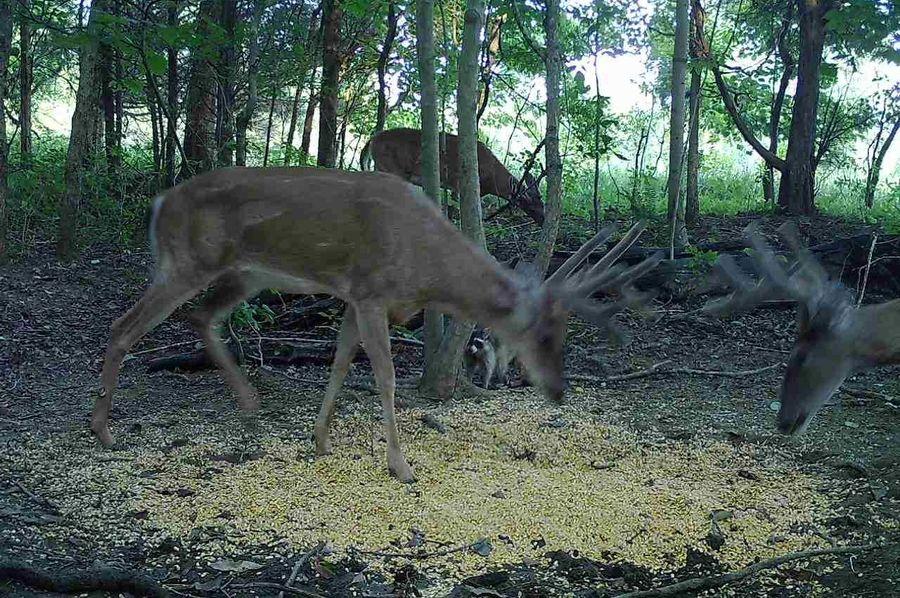 Trail cam14