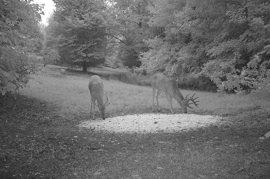 Trail cam16