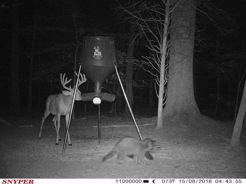 Trail cam17
