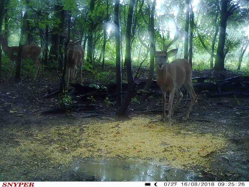 Trail cam18