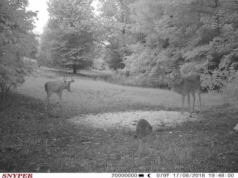 Trail cam20