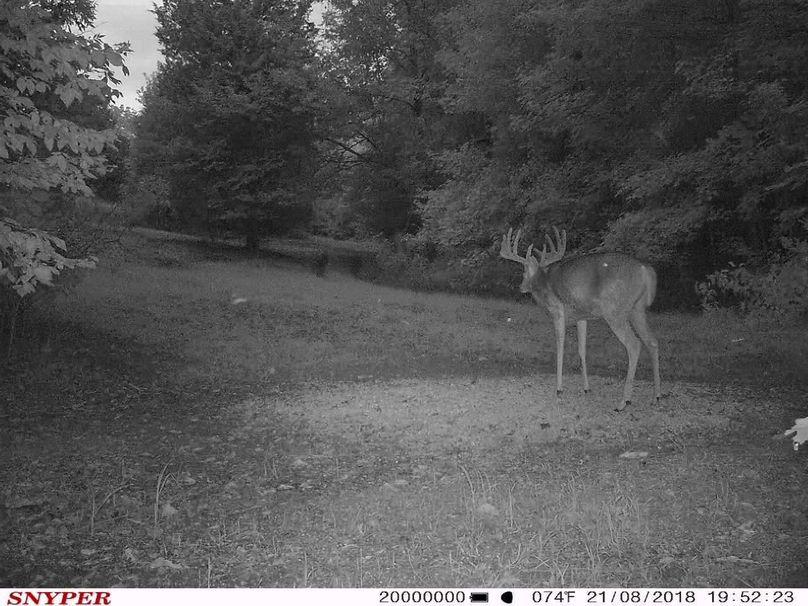 Trail cam21