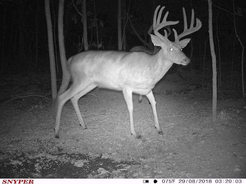 Trail cam24
