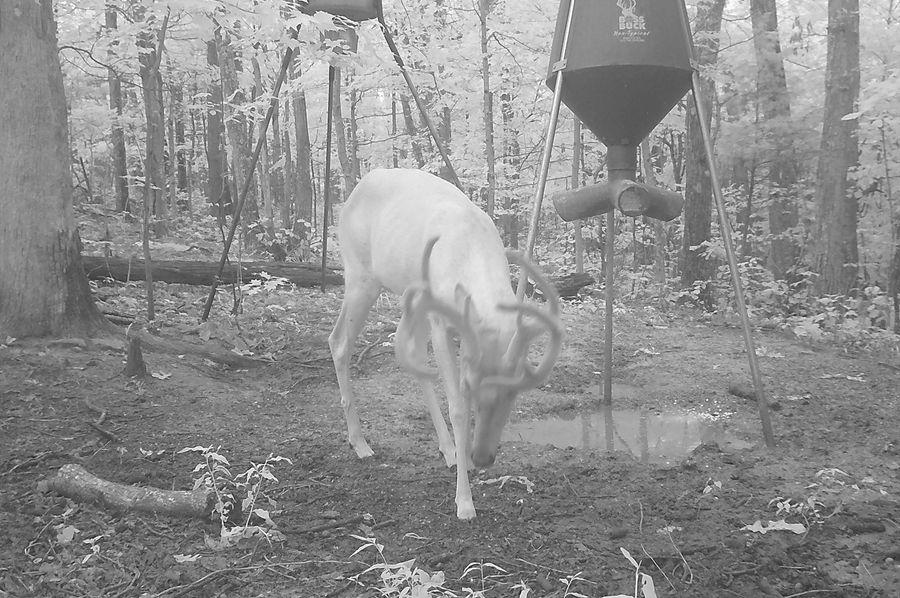 Trail cam30