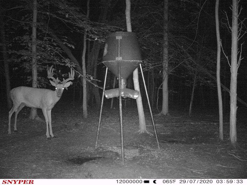 Trail cam38