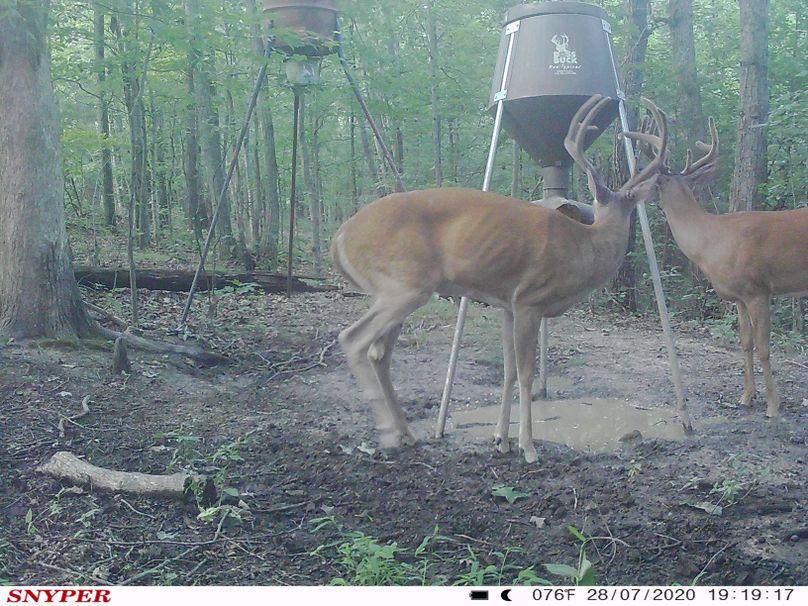 Trail cam39