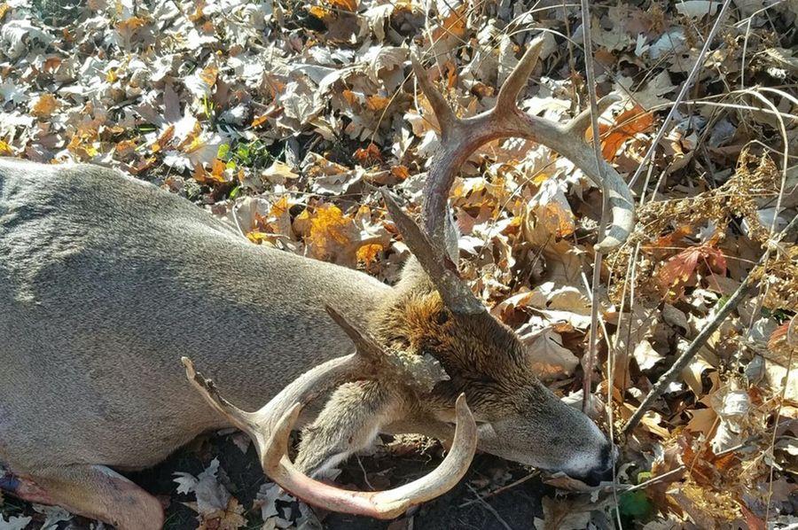 Minks deer copy