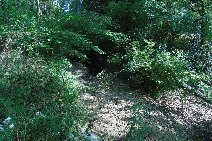 Bordering creek
