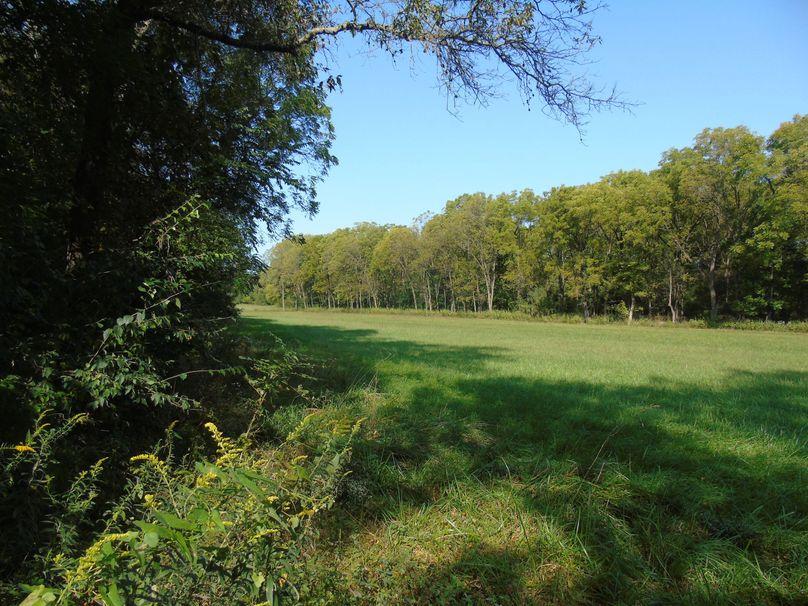 Bottmom field with lots of black walnut