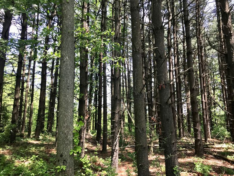 10 pines